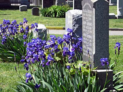 In-ground Cremation Spaces